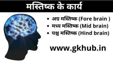 brain functions#मस्तिष्क के कार्य