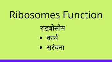 Ribosomes Function-Biology