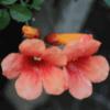 Creeper Flowers